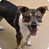 Adopt A Pet :: Trixie - Miami, FL