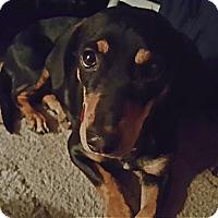 Adopt A Pet :: Annie Mae - Andalusia, PA