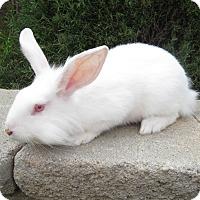 Adopt A Pet :: Curtis - Bonita, CA