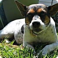 Adopt A Pet :: Carlisle - Thompson's Station, TN