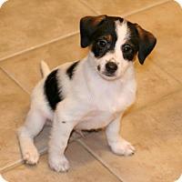 Adopt A Pet :: Zander - Rochester, NY