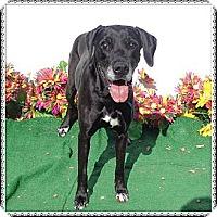 Adopt A Pet :: Shania - Woodstock, GA