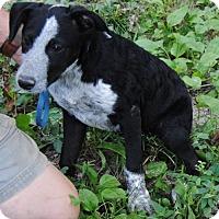 Adopt A Pet :: Phyllis Crow - Londonderry, NH