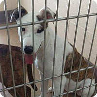 Adopt A Pet :: Gypsy Rose - Las Vegas, NV