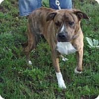 Adopt A Pet :: Tank - Cheboygan, MI