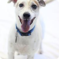 Adopt A Pet :: Pete - Bradenton, FL