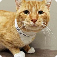Adopt A Pet :: Eugene - Shorewood, IL