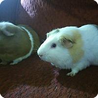 Adopt A Pet :: Nibbles & Buster - San Antonio, TX