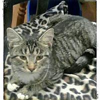 Adopt A Pet :: Steffi - Trevose, PA
