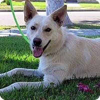 Adopt A Pet :: Espie - Irvine, CA