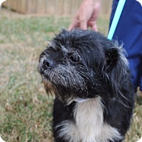 Adopt A Pet :: Eli (ETAA) - Hagerstown, MD