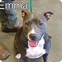 Adopt A Pet :: Emma-URGENT - Seabrook, NH