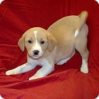 Adopt A Pet :: 16-d10-039 Angela - Fayetteville, TN