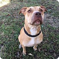 Adopt A Pet :: Savannah - Weatherford, TX
