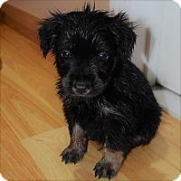 Adopt A Pet :: Eggnog (Jessica's Crew) - Frederick, MD