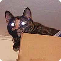 Adopt A Pet :: Priscilla - Laguna Woods, CA