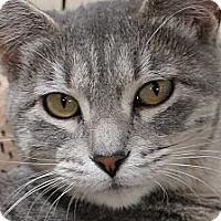 Adopt A Pet :: Purrfection - Modesto, CA