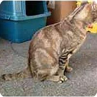 Adopt A Pet :: Limpy - Delmont, PA