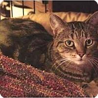 Adopt A Pet :: Lexi - Chesapeake, VA