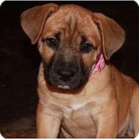 Adopt A Pet :: Ziva - Rowlett, TX