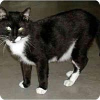 Adopt A Pet :: Hobo - New Port Richey, FL
