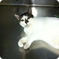 Adopt A Pet :: Mary Jane - Muncie, IN