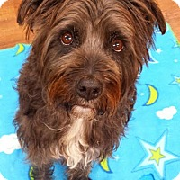 Adopt A Pet :: Pookie - Lake Odessa, MI