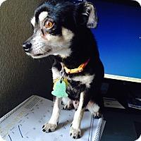 Adopt A Pet :: Dora - Indianapolis, IN