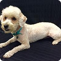 Adopt A Pet :: Remy - Encino, CA