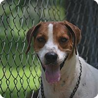 Adopt A Pet :: Roscoe - Daleville, AL