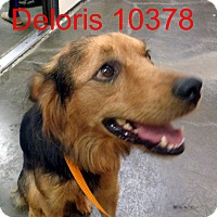Adopt A Pet :: Delores - baltimore, MD
