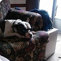 Adopt A Pet :: Rebel - Albemarle, NC