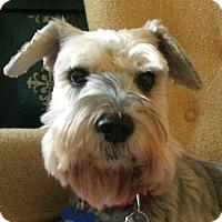 Adopt A Pet :: Precious Ann~Adoption Pending - Sharonville, OH