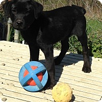Adopt A Pet :: Somers *AVAILABLE 4/13/16* - Pleasant Plain, OH