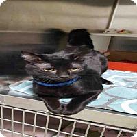 Adopt A Pet :: BINX - Bakersfield, CA