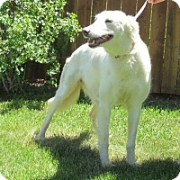 Adopt A Pet :: Sukey - Thornton, CO