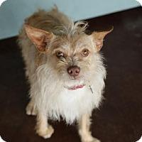 Adopt A Pet :: Houston - San Antonio, TX