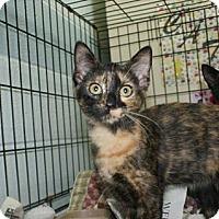 Adopt A Pet :: Priscilla - Kinston, NC