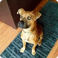 Adopt A Pet :: Rocky - New Kensington, PA