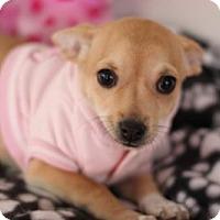 Adopt A Pet :: Glove - Phoenix, AZ