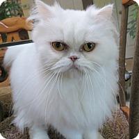 Adopt A Pet :: Clara - Davis, CA