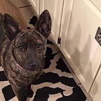 Adopt A Pet :: Myrtle - Wyoming, MI
