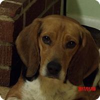 Adopt A Pet :: Copper #2 (20 lb) Family Pet - Niagara Falls, NY