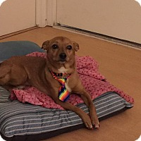Adopt A Pet :: Moose - Cerritos, CA