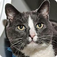 Adopt A Pet :: Tama - Prescott, AZ