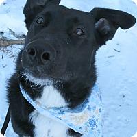 Adopt A Pet :: Zoey - Menomonie, WI