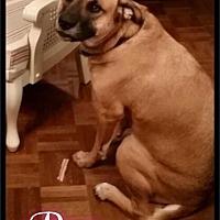 Adopt A Pet :: courtesy - Bre / 2017 - Maumelle, AR