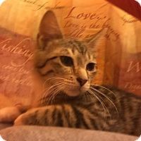"""Adopt A Pet :: Louis """"Litl Hawk"""" - Barrington, NJ"""