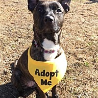 Adopt A Pet :: Baby - Elkton, MD