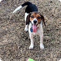 Adopt A Pet :: Sugi - Mansfield, TX
